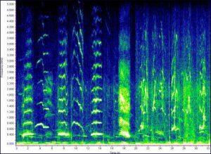humpback whale sound
