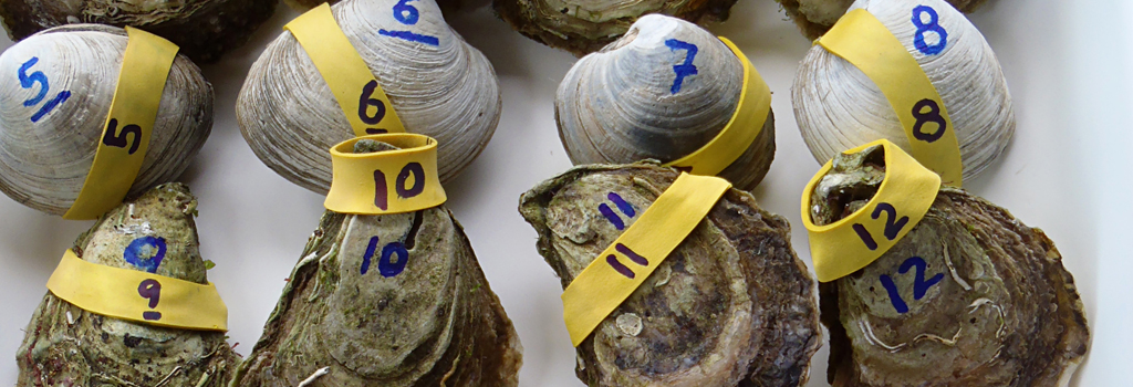 Clams-Oysters-2014x350