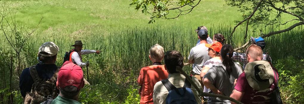 wetlands-delineation-insert