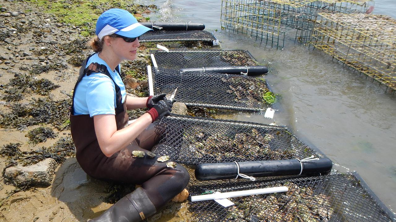 RFN oyster gear study_crop