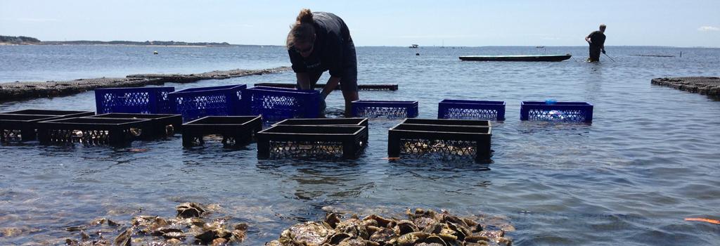 aquaculture-IMG_6649