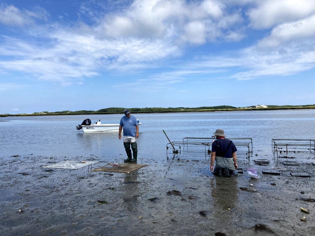 8. Next stop – Barnstable Harbor. The surf clams will also be grown in boxes and under nets at this site.