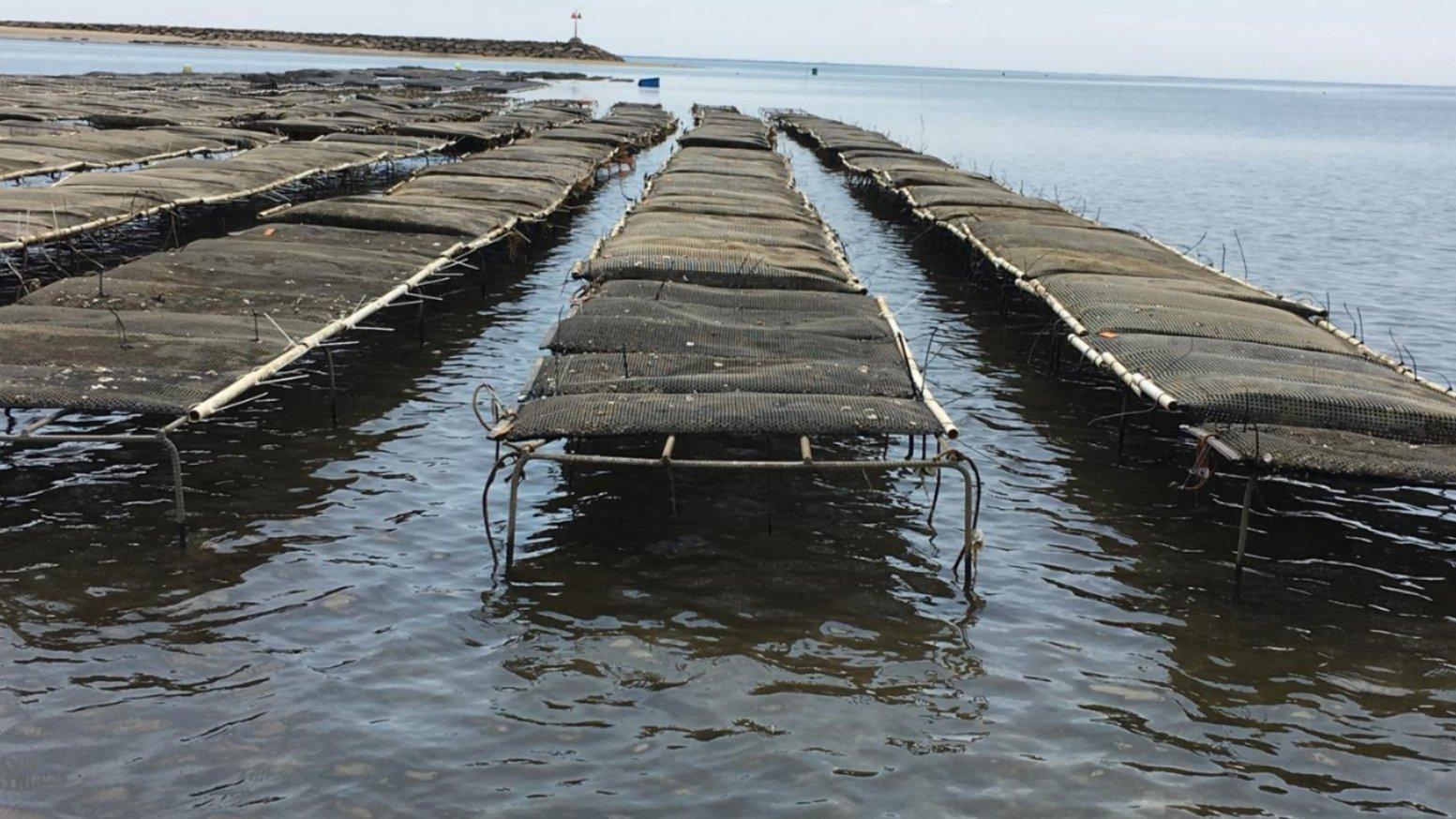 Wellfleet oyster farm